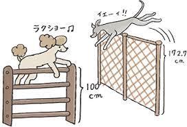 犬と快適に暮らすには、「心がまえ」が大切です!